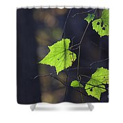 Fall Bokeh Shower Curtain