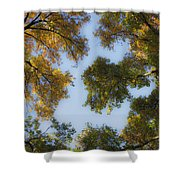 Fall Canopy In Virginia Shower Curtain