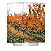 Fall Cherry Orchard Shower Curtain