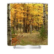 Fall Color 12 Shower Curtain