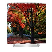 Fall Color 2010 No 5 Shower Curtain