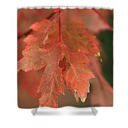 Fall Color In Softness Shower Curtain