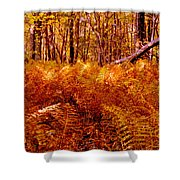 Fall Color In The Woods Shower Curtain