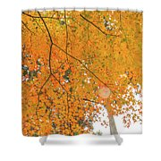 Fall Color Maple Leaves At The Forest In Aichi, Nagoya, Japan Shower Curtain