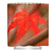 Fall Color Maple Leaves At The Forest In Kamakura, Kanagawa, Jap Shower Curtain