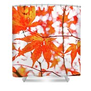 Fall Color Maple Leaves At The Forest In Kumamoto, Japan Shower Curtain