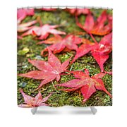 Fall Color Maple Leaves At The Forest In Nikko, Tochigi, Japan Shower Curtain