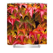 Fall Colored Ivy Shower Curtain