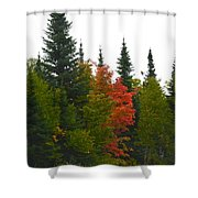 Fall Colors Are Starting Shower Curtain