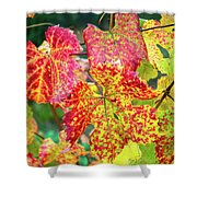 Fall Colors At The Vineyard Shower Curtain