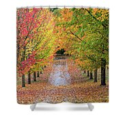 Fall Colors In Oregon Shower Curtain