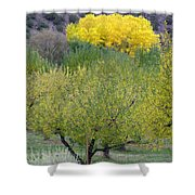 Bright Yellow Leaves, Dixon New Mexico Shower Curtain