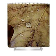 Fall Droplets Shower Curtain
