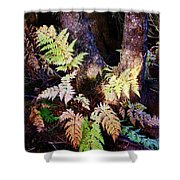 Fall Ferns Shower Curtain