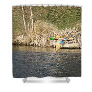 Fall Flight By Chris White Shower Curtain