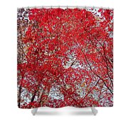 Fall Foilage Shower Curtain
