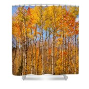 Fall Foliage Color Vertical Image Orton Shower Curtain