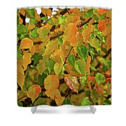 Fall Foliage II Shower Curtain