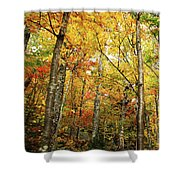 Fall Foliage On The Hike Up Mount Monadnock New Hampshire Shower Curtain