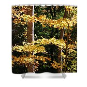 Fall Forest 1 Shower Curtain