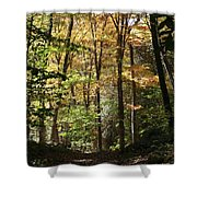 Fall Forest 2 Shower Curtain