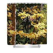 Fall Forest 3 Shower Curtain