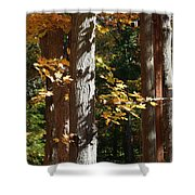 Fall Forest 4 Shower Curtain