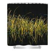 Fall Grasses - Snake River Shower Curtain