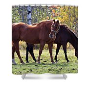 Horses Fall Grazing Shower Curtain