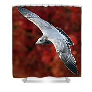 Fall Gull Shower Curtain