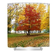 Fall In Kaloya Park 5 Shower Curtain