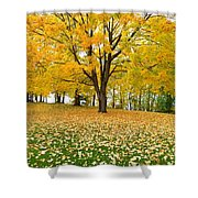 Fall In Kaloya Park 7 Shower Curtain