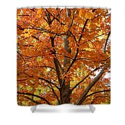 Fall In Kayloya Park 2 Shower Curtain