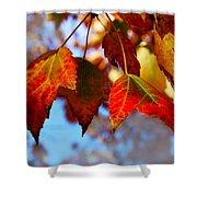 Fall In Maple Ridge Shower Curtain