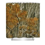 Fall In The Swamp Shower Curtain