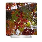 Fall In Virginia Shower Curtain