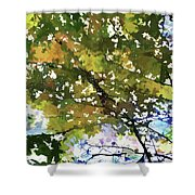 Fall In Woods Shower Curtain
