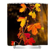 Imperfection Perfection Shower Curtain