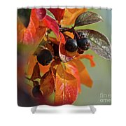 Fall Leaves And Berries Shower Curtain