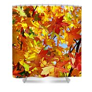 Fall Leaves Background Shower Curtain