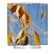 Fall Leaves Study 3 Shower Curtain