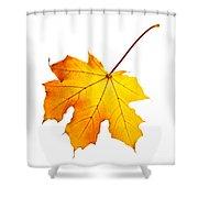 Fall Maple Leaf Shower Curtain by Elena Elisseeva