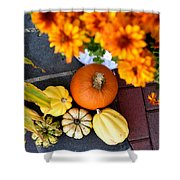 Fall Mums And Pumpkins Shower Curtain