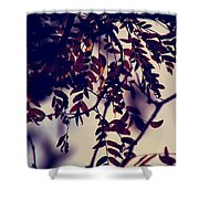 Fall Of Shades Shower Curtain