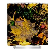 Fall On The Ground Shower Curtain