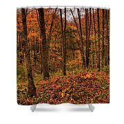 Fall On The Ice Age Trail Shower Curtain