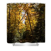 Fall Path In Golden Yellow Shower Curtain