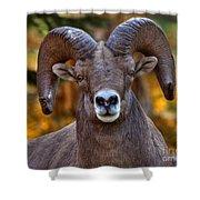Fall Ram Shower Curtain