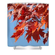 Fall Red Orange Leaves Blue Sky Baslee Troutman Shower Curtain