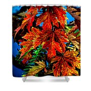 Fall Reds Shower Curtain